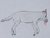 La rage du loup #2